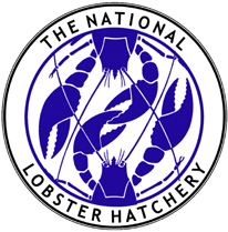 National Lobster Hatchery